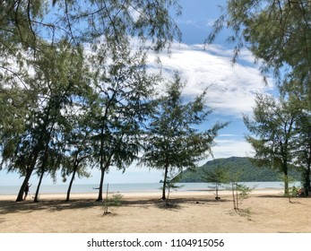 Pine trees on the beach. Blue sky and mountain view.