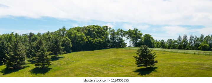 Pine trees on a gentle hill