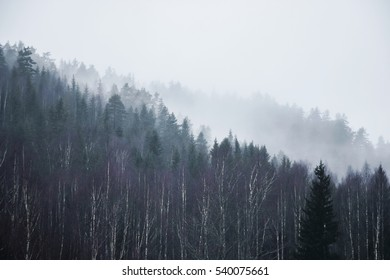pine trees on hill with fog in autumn