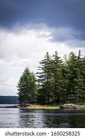 Pine trees on the rocky coastline in Maine.