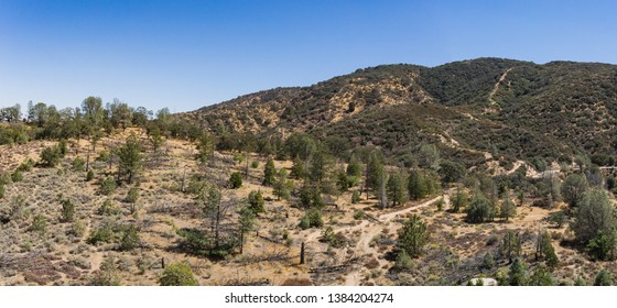 Pine trees on wooded hillside in mountains of Southern California in the American west.