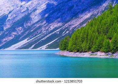 Pine trees over lake Livigno
