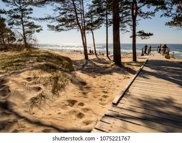 Pine trees in a park on the sandy beach of the Baltic Sea in Palanga, Lithuania