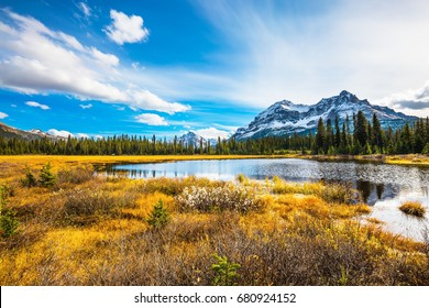 Pine trees reflected in smooth water of the lake. Waterlogged valley in the snowy Rocky Mountains.  Sunny day. The concept of ecotourism  and active tourism