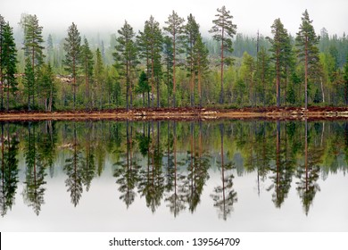 Pine trees reflected in tarn or lake in scandinavian forest