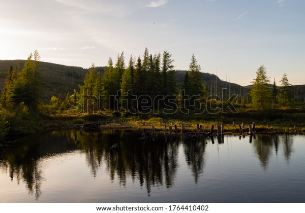 Pine trees reflecting in a lake, Quebec