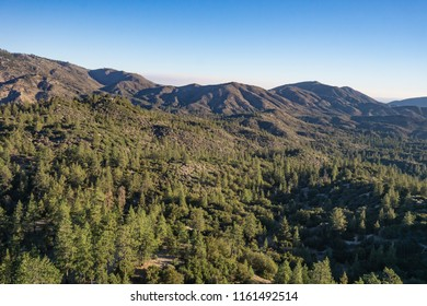 Pine trees stand in the golden light of morning in the mountains above Angeles National Forest.