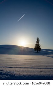 Pine trees standing in the snow field and contrail in the dusk sky