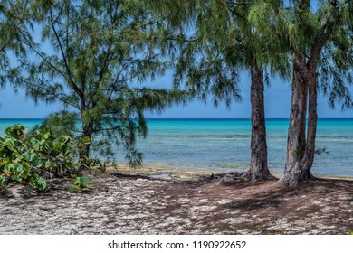 Pine trees and tropical plants along this secluded beach in Princess Cays in the Bahamas.