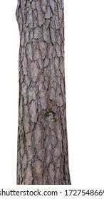 pine trunk isolated on white background