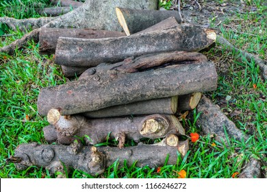 Pine wood logs on grass in forest.,  Round pine wood logs - piled up., Heap of sawn pine wood logs with rough pine bark closeup view.