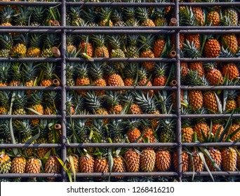 Pineapple fruit on truck, Harvest tropical fruit in Thailand