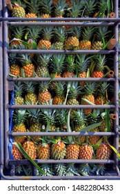 Pineapple fruit on truck, Tropical fruit background