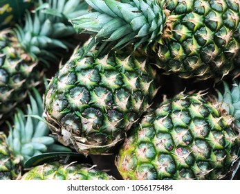 pineapple harvest. pineapple close up. many pineapples.