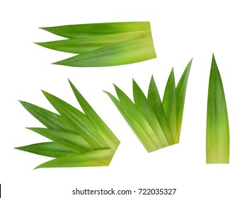 Pineapple leaves isolated