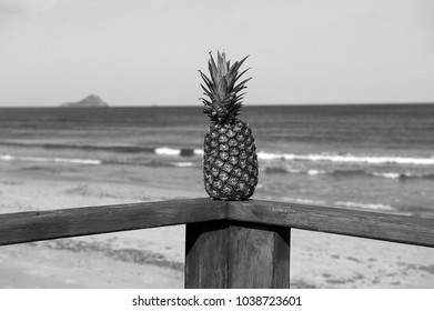 pineapple on wooden handrails with Mediterranean sea on its background, b&w