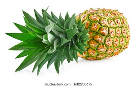 Pineapple slices with leaves. Pineapple isolate. Full depth of field