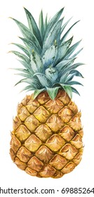 Pineapple. Watercolor botanical illustration.