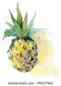 Pineapple. Watercolor illustration. Layered tif.