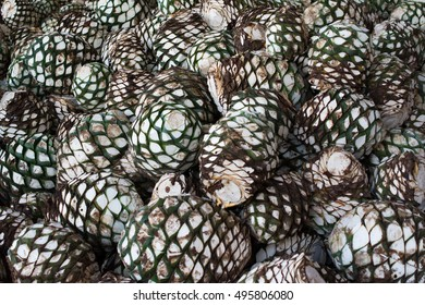 Agave Head Images Stock Photos Vectors Shutterstock