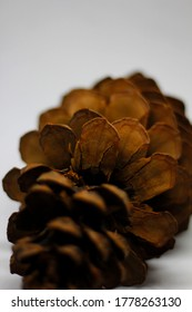 Pinecone pine on a white background
