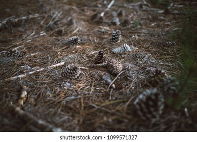 Pinecones on the forest floor on a cloudy day