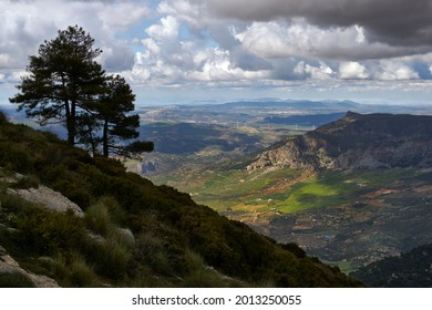 pines against the light with clouds in the Sierra de Prieta and the Guadalteba region in the province of Malaga in the background. Andalusia, Spain