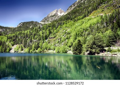 Pines and firs forest surrounding the Lake of San Mauricio in the Spanish Pyrenees.