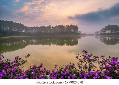 Pines forest and beautiful lake in Ban Ang Village, Moc Chau, Vietnam
