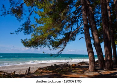 Pines in front of the sea, pine branches over the beach, the legendary Colchis from Greek myths. Pitsunda, Abkhazia