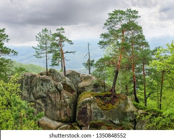 Pines growing on top of the outcrop of gigantic sandstone rocks among the forest in spring cloudy day. Landscape park Dovbush rocks near village Bubnishche, Ivano-Frankivsk Oblast, Ukraine