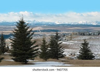 Pines and houses near Cochrane, Canadian Rockies, Alberta