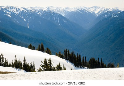 Pines and Mountain Valley at Olympic National Park