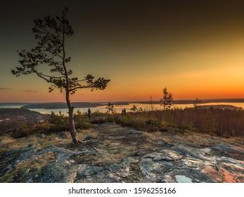Pines on Mount Paaso near the city of Sortavala in Karelia. November