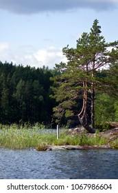 Pines At Saimaa Lakeside