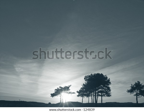 pines and sun