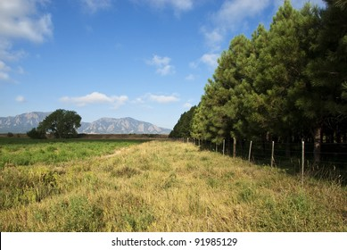 Pines in a tree farm by an open field appear to be marching towards the horizon, with view of mountains in the distance.