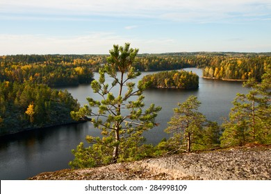 Pine-tree on a background of autumn lake landscape