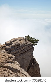 Pine-tree on a precipice