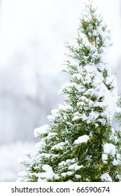 Pine-tree in snow - shallow DOF