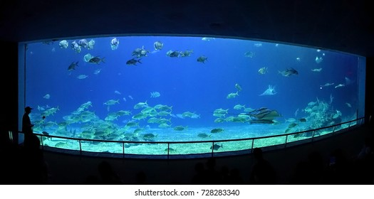 PINGTUNG, TAIWAN -- JULY 6 , 2017: Visitors to the National Marine Biology Museum watch a large variety of ocean life at the grand aquarium of the museum.