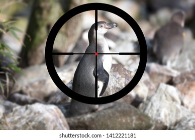 Pinguin in captivity, Hunting a pinguin, selective focus on the eye
