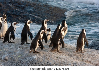 pinguin national parks and nature reserves of south africa