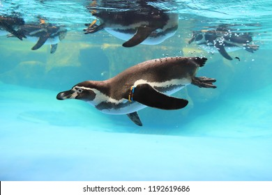 Pinguin And Part of Hand
