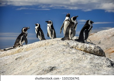 Pinguins colony in Boulders beach, JAR