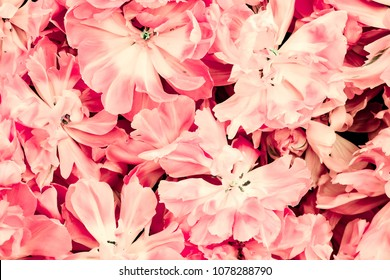 Pink abstract flower background, pastel color.