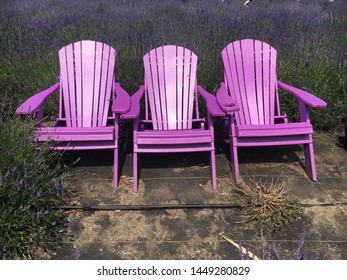 Pink Adirondack chairs in a field of lavender.