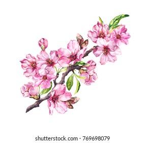 Pink apple flowers, sakura, almond flowers. Watercolor flowering branch