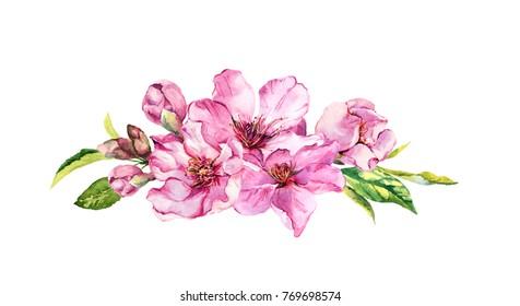 Pink apple flowers, sakura, almond flowers. Watercolor