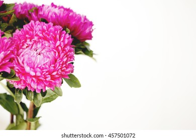 pink asters . beautiful bright colors toned picture in retro style
